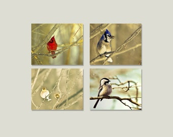 SALE, Bird Prints, Nature Photography, 4 Photo Set, Cardinal, Chickadee, Bluejay