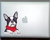 Boston Terrier Wearing Scarf Full Color Art Decal Apple Macbook Laptop