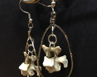 Bird vertebrae (Birdebrae) earrings dangled in oval
