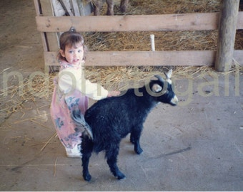 Vintage Photo, Girl Petting Black Goat, Petting Zoo, Toddler, Color Photo, Found Photo, Old Photo, Snapshot, Childhood