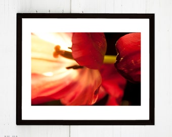 Digital Download An Abstraction of Tulips Photograph