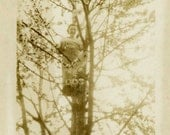 "Vintage Photo ""Stuck Up a Tree"" Snapshot Antique Photo Old Black & White Photograph Found Paper Ephemera Vernacular - 8"