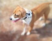 Durable Dahlia Dog Collar Flower  - Pet Accessory - Dog Accessories - Cat Acessories - Dog Flower Girl - Dog Wedding - Cat Collar Flower