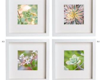 5x5 Fine Art Photography Print . Succulents . Flowers . Cactus . Plants . Nature . Gift Set Prints for Ikea Ribba Frame . Home Decor