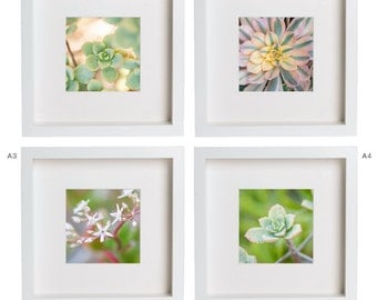 5x5 fine art photography print succulents flowers cactus plants nature gift set prints for ikea ribba frame home decor