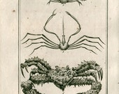 1802  Antique Print Crabs  Latreille, Buffon Arthropod Scientific Illustration Maia, Macrope