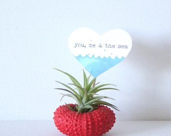 Red Urchin Air Plant Planter with Air Plant and card. Gift wrap included.