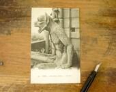 Circa 1909 Vintage French Postcard Gargoyle at Notre Dame Cathedral Paris, France Notre-Dame Chimère Post Card #239