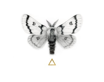 Moth to the Flame - Moth Graphite Drawing with Hand-Applied 24 Karat Gold Leaf Embellish