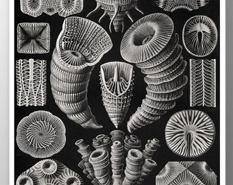 Coral Fossil Print, Fossil Poster, Sea Fossil,  Coral Illustration by Ernst Haeckel, Educational Art, Haeckel Print, Coastal Art, Wall Art