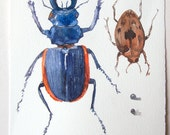 Insects art/ Original watercolor illustration/ Blue beetle watercolor/ Bugs painting/ Nature painting, insects illustration 7,5'x11' OOAK