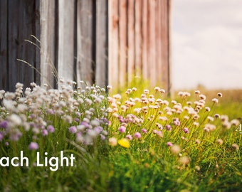 Peach Light - Lightroom Preset INSTANT DOWNLOAD