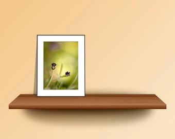 5x7 Matted Photo Print, Floral Wall Art Print, Lavender Photo Print, Purple Yellow Green Wall Decor Print, Affordable Art Print