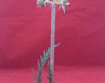 Taxidermy Gouldian Finch Bird (Erythrura Gouldiae) a Perch///mouse/ermine/rat