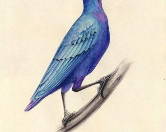 Watercolor Bird. Purple Starling