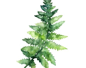 "Fern Print - Made from my Original Fern Painting ""Fern Study 1"", Fern, Botanical Print, Watercolor Fern, Fern Painting, Green, Woodlands"