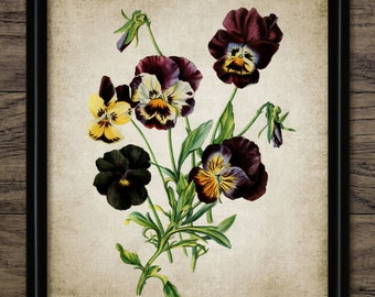 Pansies Print - Pansy Plant Illustration - Botanical Flower Art - Digital Art - Printable Art - Single Print #233 - INSTANT DOWNLOAD
