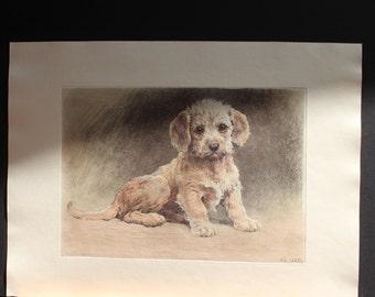 Animal Engraving/Puppy Engraving/Original, Vintage, Signed Animal Engraving/Signed Engraving by Kurt Meyer-Eberhardt/Dog Engraving