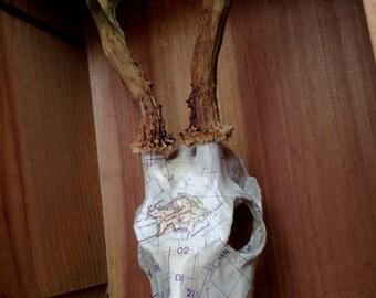 Sea Map Skull