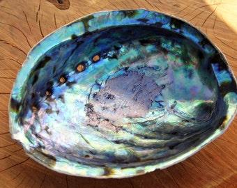 New Zealand Abalone - Rainbow Paua Shell