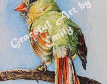 Female Cardinal Bird (Original Colored Pencil Drawing)