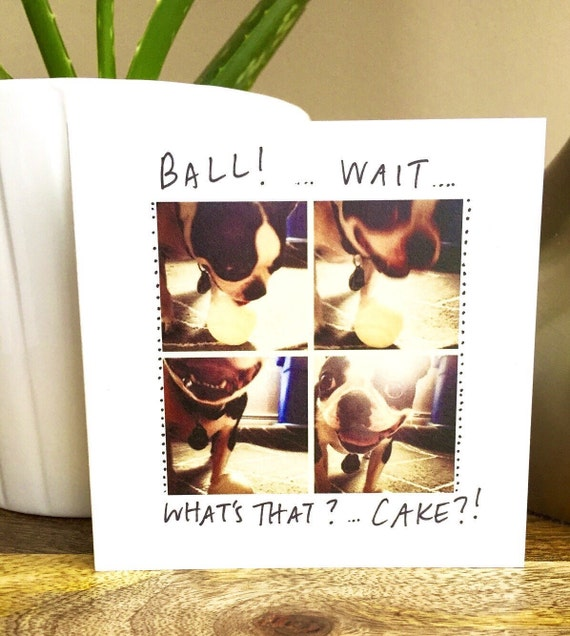 Did you say cake? Happy birthday card funny, happy birthday card unique, boston terrier birthday card