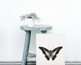 Real butterfly art print - Black and white butterfly print - Modern wall art - Digital butterfly art - Scandinavian modern design