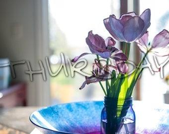 SHADOWED DAYS. (Scrapbooking Digital Download - Photoshop Brush Stamps - Handwritten Days of the Week)