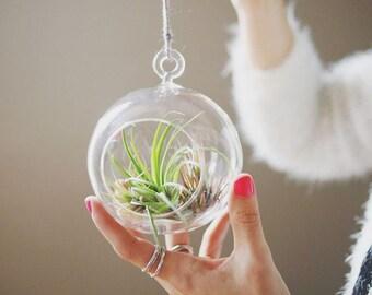 GLASS GLOBE TERRARIUM - Hanging Air Plant Terrarium // Tillandsia Terrarium // Eco Gift // Living Decor // Indoor Garden // Hanging Vase