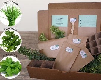 AROMATIC Kit in your kitchen to cultivate (basil, chives and cilantro). Everything you need to grow your herbs