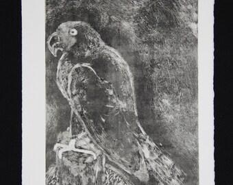 Parrot of Prey, 1 of 1