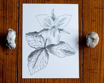 Trillium Botanical Illustration Pen and Ink Drawing Art Print