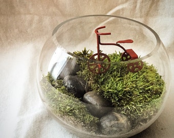 Little Red.  Live moss open terrarium with red tricycle minature .