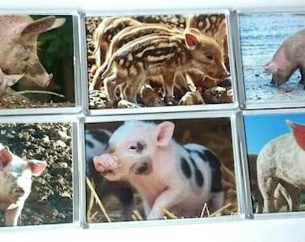 Pigs Fridge Magnet, Set of 6/ Refrigerator Magnets / Kitchen Decor