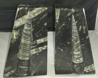 ORTHOCERAS FOSSIL BOOKENDS Many Specimens ~ Great for accomplishing goals in the business world!! Free Shipping!!