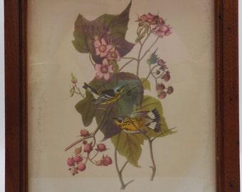 SALE!! Vintage Audubon Print Nice Frame!