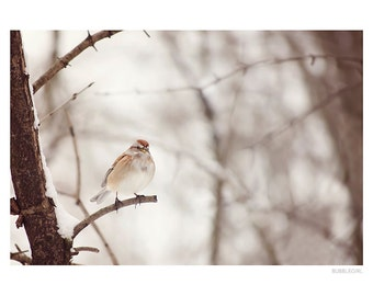 Nature Photography PRINT, Sparrow in the Winter, Wall Art