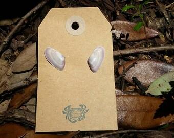 Coquina Shell Earrings