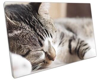 Small KITTEN Sleeping canvas WALL ART C2633