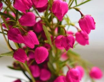 Little Pink Flower Package