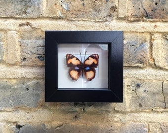 BUTTERFLY  MINIATURES  II -  Handcrafted 2D print mounted inside picture frame