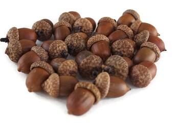 LARGE Acorns Natural Acorns Real Acorns Large Real Acorns Large Natural Acorns Thanksgiving Fall Acorns Vase Filler  - 12, 25 or 50 acorns