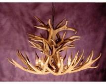 Real Antler Royal Crown Mule Deer Chandelier Light, Rustic