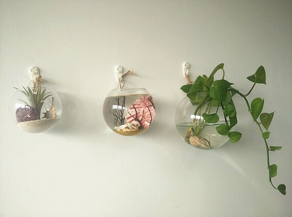 Hanging Plant Wall Decor : A set of large opening round hanging terrariums indoor
