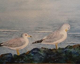 Seagulls watercolor giclee print, shorebirds, ring-billed seagulls