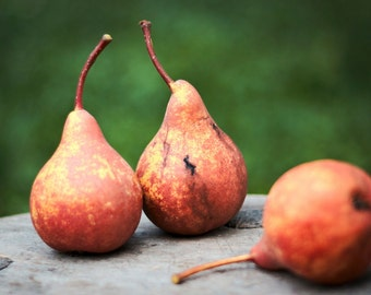 Pears in the garden, Red pears, Nature photography, Food Art, Fruit Photography, Instant Digital Download