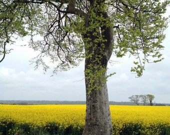 Tree Photography - Landscape Photography - Ireland Photograph - Original Fine Art - Framed Photography - Wexford Ireland