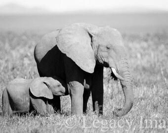 Elephant, Photography, Baby Elephant, Photo, Wildlife, Photograph, Black, White, Africa, Nursery, Wall Art, Baby Animal, Family, Baby