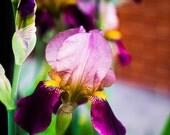 Spring Garden - Canvas Pr...
