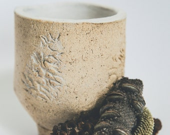 Banksia Teacup